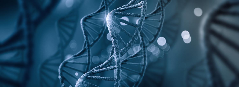 Revilab SL — пептидные биорегуляторы, поворачивающие время вспять